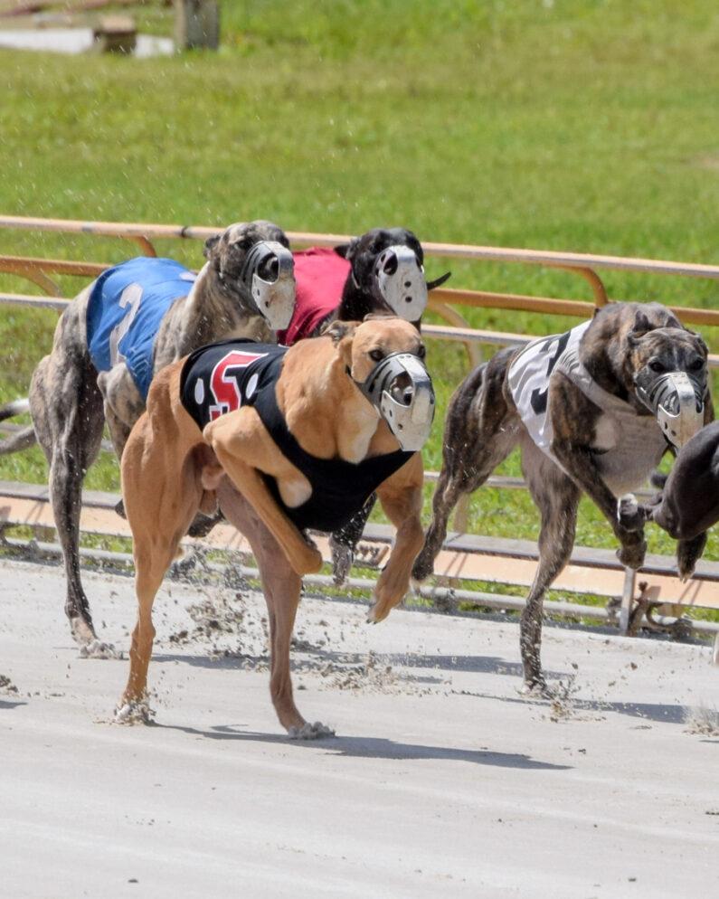 Hipercasino Köpek Yarışları Tutturma Taktikleri